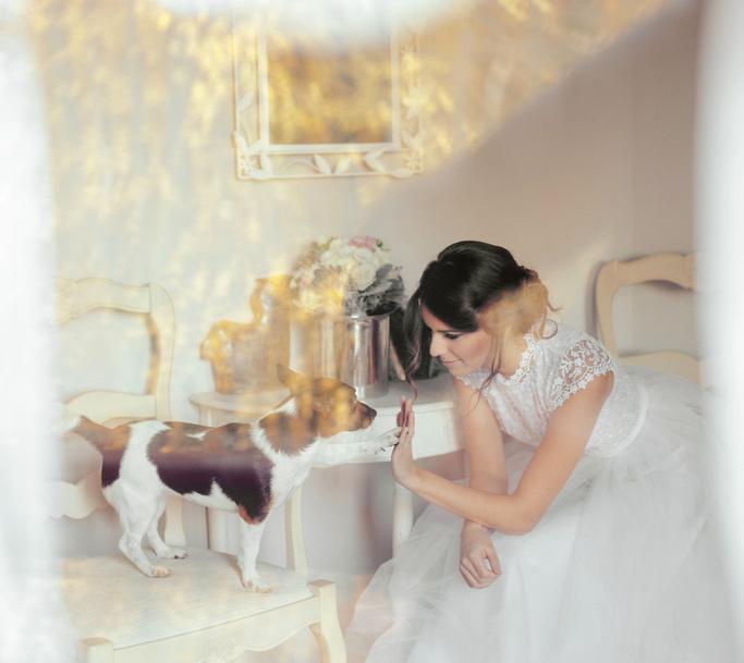 Dog on wedding